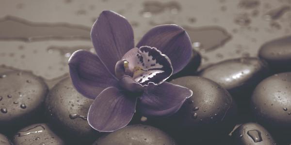 Декор 25х50 Тъмна орхидея