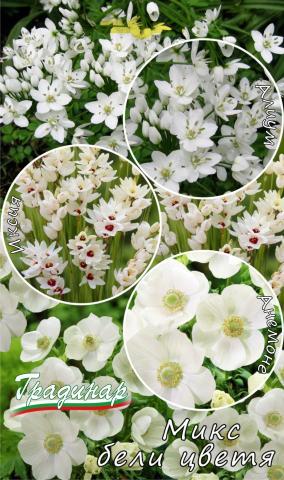 Луковици Микс бели цветя