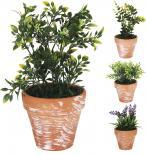 Зелено цвете в керамична саксия