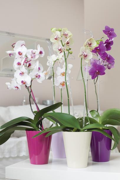 Кашпа Vulcano matt ф13см за орхидеи