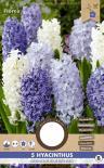 Луковици Зюмбюл Orientalis Blue 5бр.