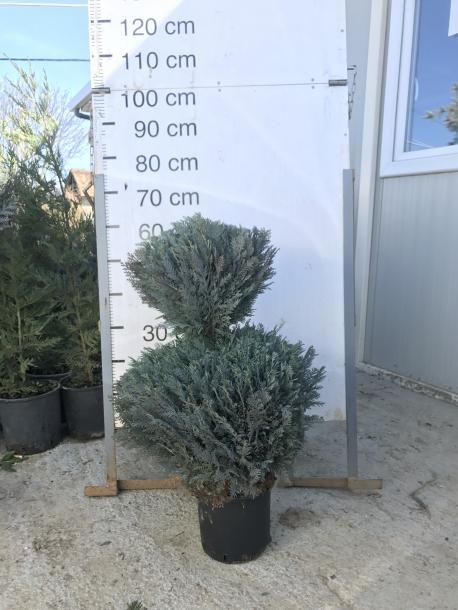 Лъжекипарис Columnaris 60 см, 2 топки