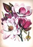 Картина с дървена рамка Premium ''Цветя''