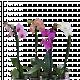 Орхидея Фаленопсис ф12/3+, 1 стебло 2
