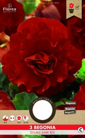 Луковици PURE Бегония Grandiflora тъмно червено