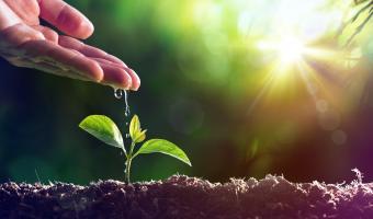 Как да си направим своя зеленчукова биоградина
