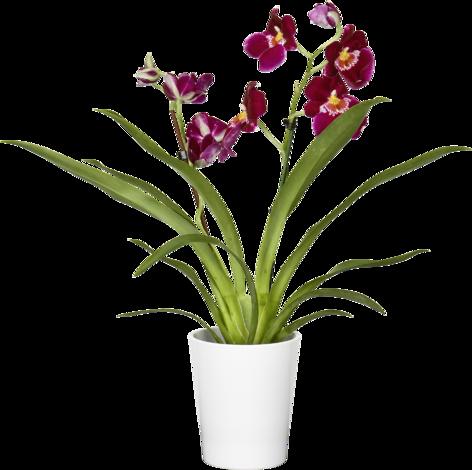 Орхидеен микс O12 см
