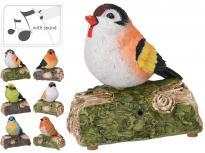 Птиче върху дънер, със звук