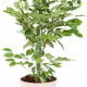 Зелени цветя микс Ф:17см 2