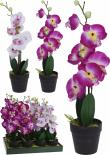 Орхидея в саксия 20х10х47см