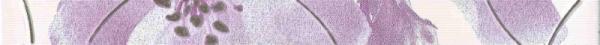Фриз Spring violet 4.5x60