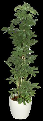 Зелен микс Ф:24 см