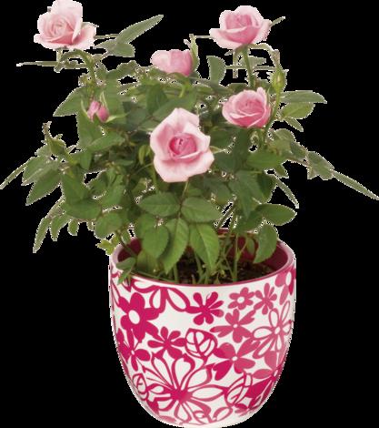 Роза микс, Ф:6 см.