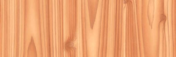 Фолио Дърво бор