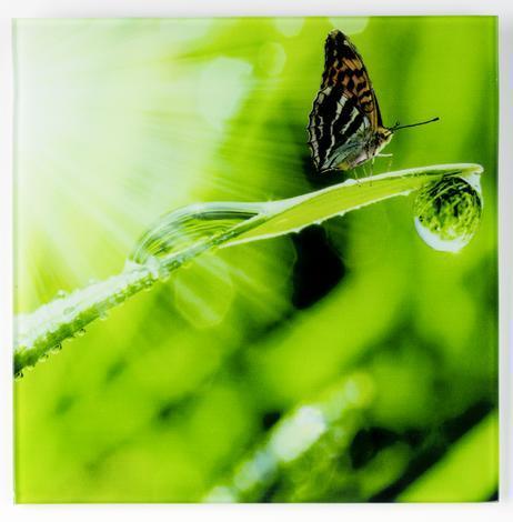Картина ст.20х20 Пеперуди
