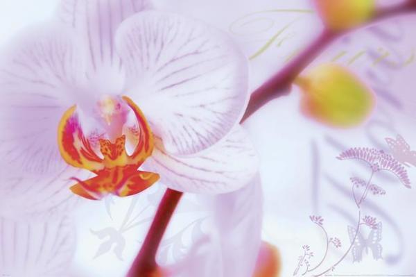 Постер №72 62x93см Orchidee