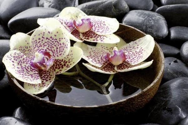 картина дърв.рам.116х78 орхид.