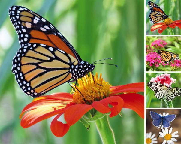 Картина за външна употреба Пеперуда 58x58x2.7см