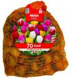 Луковици Budget Big Bag - Лалета Triumph 70 бр.