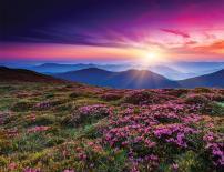 Картина Beautiful Fields 60x80 см