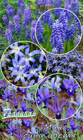 Луковици Микс сини цветя