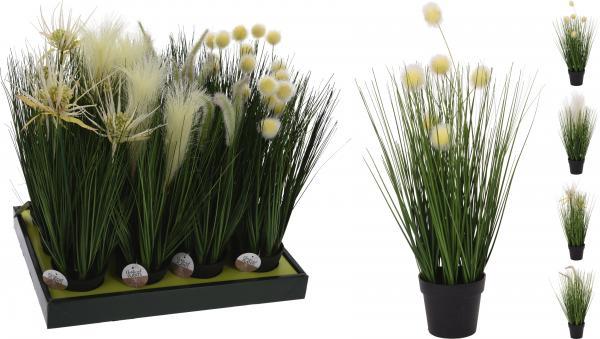 Декоративно цвете в саксия