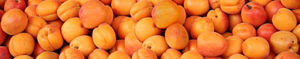 Принт гръб с плод и зеленчук , код 03