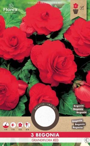Луковици PURE Бегония Grandiflora червено