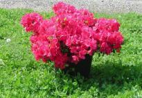 Други външни растения