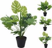 Зелено растение в саксия голямо