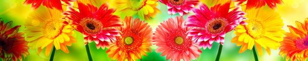 Принт гръб с цветя, код 012