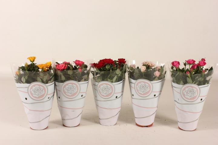 Роза микс Ф12 см
