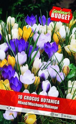 Botanical Crocusses mixed 5/7- Art. BG-825_0016