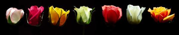 Принт гръб с цветя, код 022
