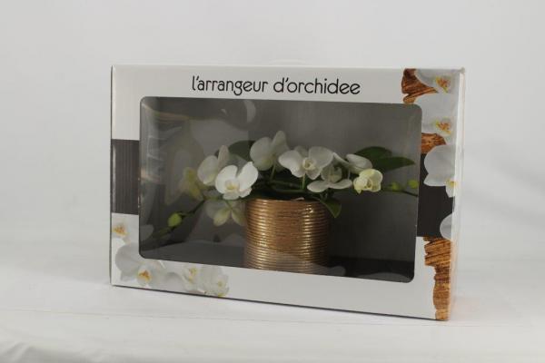 Орхидея Фаленопсис L'arrangeur 2стебла/18+
