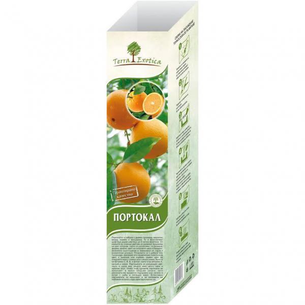 Цитрус - портокал корен пакетиран в саксия и кутия