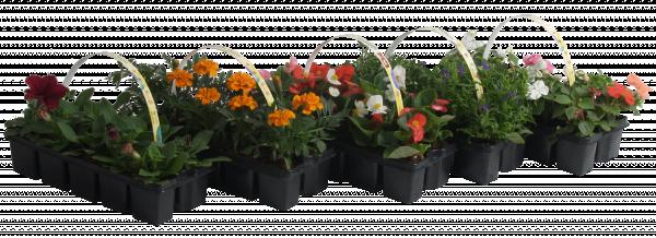 Разсад за цветя 10 броя