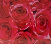 Самозалепващо фолио  45см x 2м - Рози