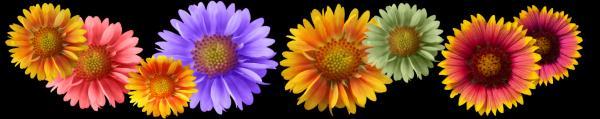 Принт гръб с цветя, код 016