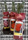 Корени рози Topgreen