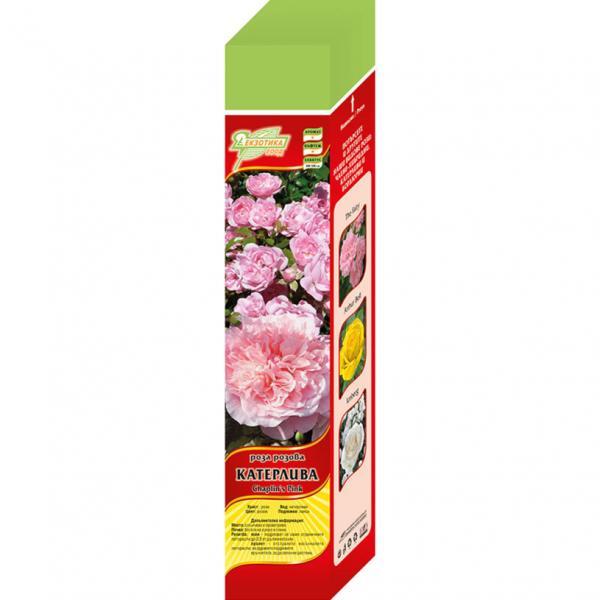 Сортове рози в кутия - 10-15 различни сорта