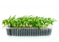 Тава за отглеждане на микро растения