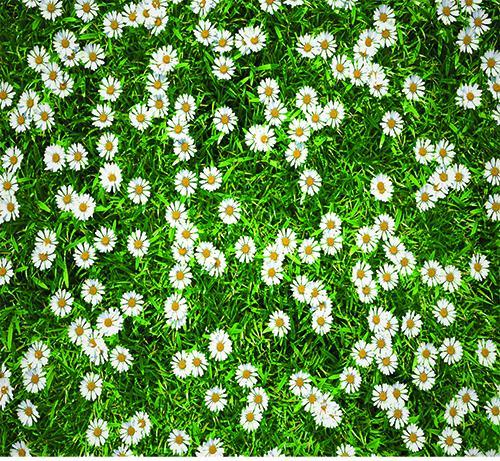 Протектор за под универсален 100х120см, 01 цветя