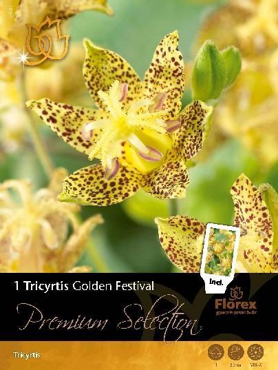 Луковици Premium Лилия-Tricyrtis Golden Festival