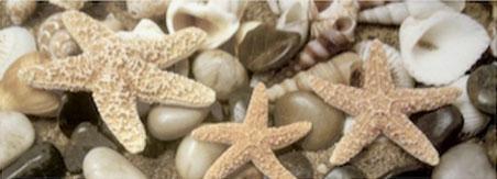Декор Starfish Set 45x60