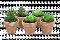 Растение в саксия