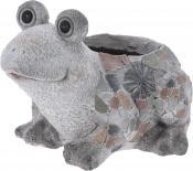 Саксия жаба